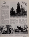 1952 NYC Christmas Tree was from Allamuchy
