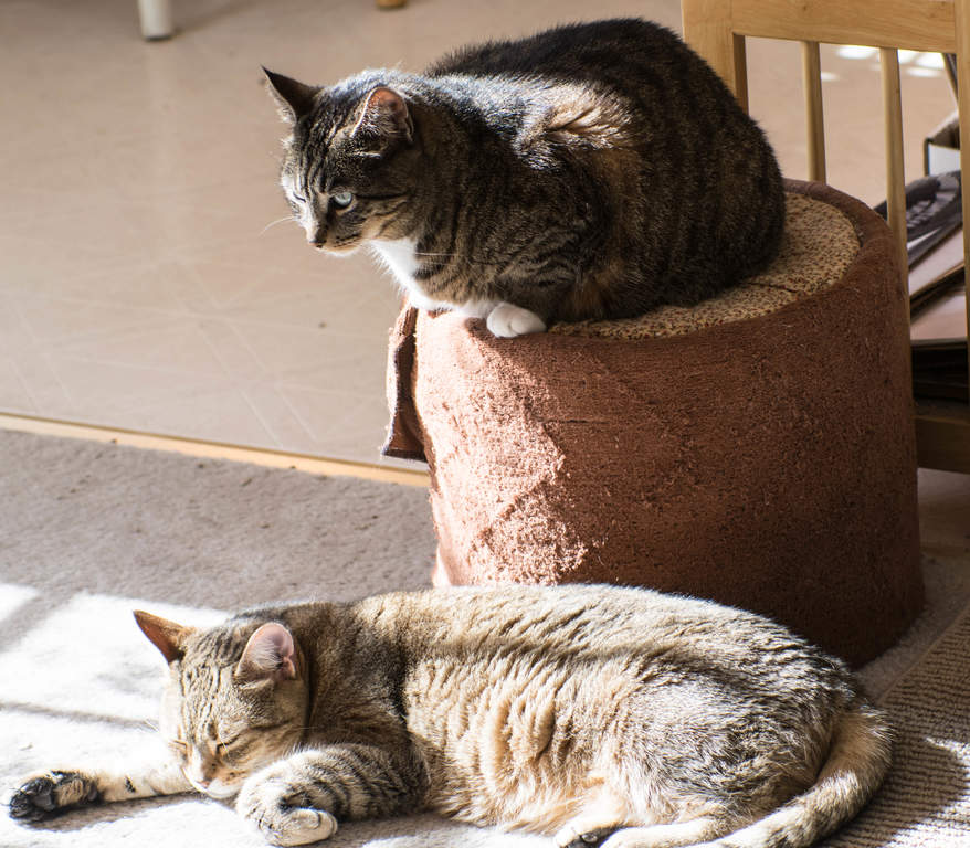 cat pancreatitis symptoms